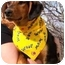 Photo 4 - Shepherd (Unknown Type)/Terrier (Unknown Type, Medium) Mix Dog for adoption in Osseo, Minnesota - Sassy
