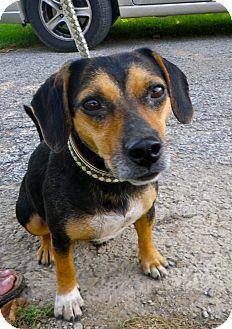 Hound (Unknown Type) Mix Dog for adoption in Metamora, Indiana - Cheron