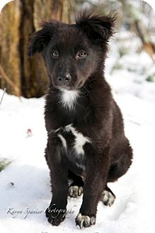 Hound (Unknown Type)/Terrier (Unknown Type, Medium) Mix Puppy for adoption in Monroe, New Jersey - Bear