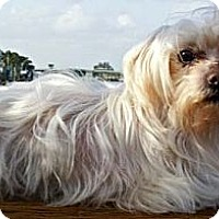 Adopt A Pet :: Nino - CAPE CORAL, FL