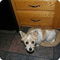 Adopt A Pet :: Connor - Mt Gretna, PA