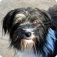 Adopt A Pet :: Moobert - Oakley, CA