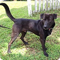 Adopt A Pet :: Grayson - Richmond, VA