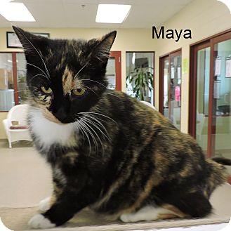 Domestic Shorthair Cat for adoption in Slidell, Louisiana - Maya