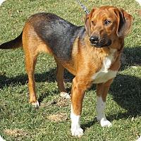 Adopt A Pet :: Eliot-Illinois - Wood Dale, IL