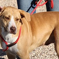Adopt A Pet :: Roo - Clifton, TX