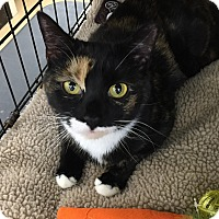 Adopt A Pet :: Mia - Horsham, PA