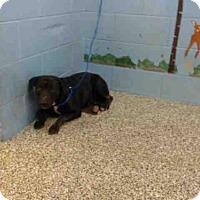 Adopt A Pet :: COCO - San Bernardino, CA