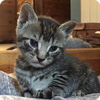 Adopt A Pet :: Bean - Philadelphia, PA