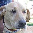 Adopt A Pet :: Jobe