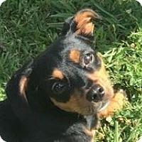 Adopt A Pet :: Tyke - Newnan, GA
