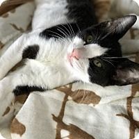 Adopt A Pet :: Micky - Island Park, NY