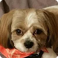 Adopt A Pet :: Cesar - Alpharetta, GA