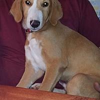Adopt A Pet :: Pesto - Charlestown, RI