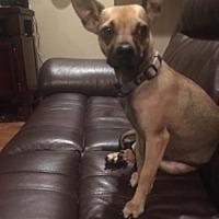 Adopt A Pet :: Frito - Wichita Falls, TX