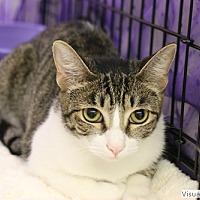 Adopt A Pet :: Missy - Westchester, CA