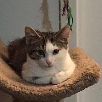 Adopt A Pet :: Fabio - Toronto, ON