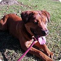 Adopt A Pet :: Bruce - Santa Barbara, CA
