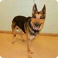Adopt A Pet :: Adolph - North Wales, PA
