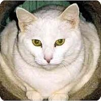 Adopt A Pet :: Donut - Medway, MA