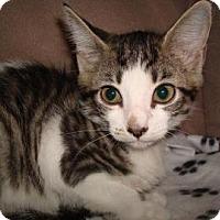 Adopt A Pet :: Harlow - Miami, FL