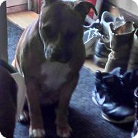 Adopt A Pet :: Kita - Albert Lea, MN