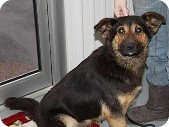 German Shepherd Dog Dog for adoption in Greenville, Kentucky - Bella
