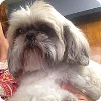 Adopt A Pet :: Ginger - Richmond, VA