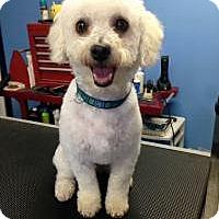 Adopt A Pet :: Bruno - Mt Gretna, PA
