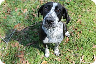 Pointer Mix Dog for adoption in Atmore, Alabama - Dixie