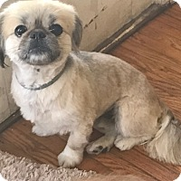 Adopt A Pet :: paco - SO CALIF, CA