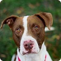 Adopt A Pet :: Nestle - Bradenton, FL
