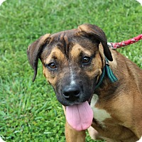 Adopt A Pet :: Jack Dempsey - Harmony, Glocester, RI