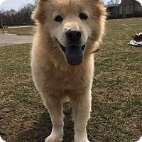 Adopt A Pet :: Kia **adopted* - Prescott, ON