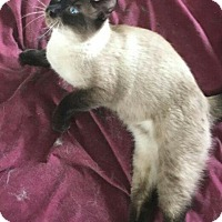 Adopt A Pet :: Jake & Faybian - Virginia Beach, VA