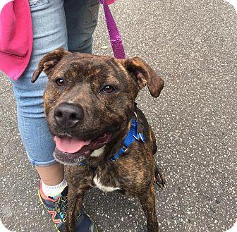 Terrier (Unknown Type, Medium) Mix Dog for adoption in Walden, New York - Josie