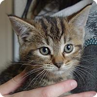 Adopt A Pet :: Odessa - Greenfield, IN