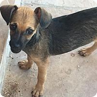 Adopt A Pet :: Hannah - Tucson, AZ