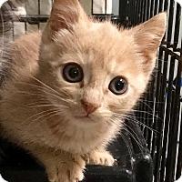 Adopt A Pet :: Nugget - East Brunswick, NJ