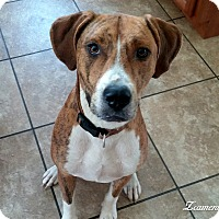 Adopt A Pet :: Butter - Pittsboro, NC