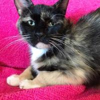 Adopt A Pet :: Sativa - Maryville, MO
