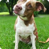 Adopt A Pet :: Sunshine - DeRidder, LA