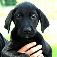 Adopt A Pet :: Tatum - Southbury, CT