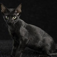 Adopt A Pet :: Thing 2 - Gainesville, FL