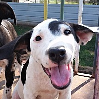 Adopt A Pet :: Pippy - Guthrie, OK