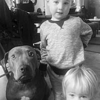 Adopt A Pet :: Audrey - Everett, WA