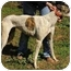 Photo 3 - Greyhound Dog for adoption in Chagrin Falls, Ohio - Carly (Cart Girl)