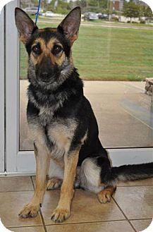German Shepherd Dog Dog for adoption in Pike Road, Alabama - Meisha