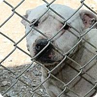 Adopt A Pet :: Laine - Baxter, TN