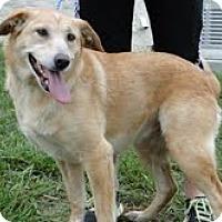 Adopt A Pet :: Goldllocks - Lewisville, IN